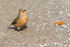 nyfiken fågel Arkivfoton