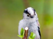 nyfiken fågel Royaltyfria Bilder