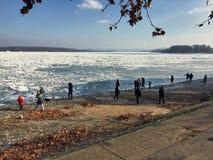 Nyfiken folkmassa som ser isbergen som täcker den vidsträckta Donauen r Arkivfoto