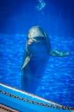 Nyfiken gullig delfin Arkivbilder