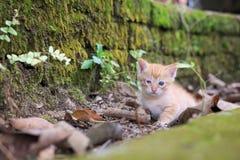 Nyfiken gullig katt fotografering för bildbyråer