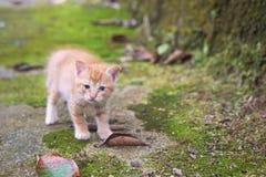 Nyfiken gullig katt arkivfoto