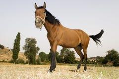 nyfiken häst Arkivfoton