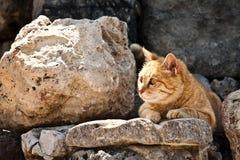 nyfiken katt Arkivbild