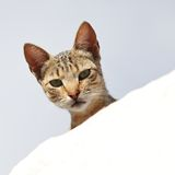 nyfiken katt Arkivfoto