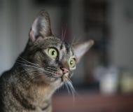 nyfiken katt Fotografering för Bildbyråer