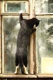 Nyfiken katt i fönstret Arkivfoto