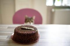 nyfiken katt arkivfoton