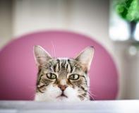 nyfiken katt royaltyfria foton