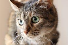 Nyfiken katt upp slut royaltyfria bilder