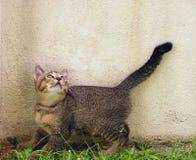 nyfiken kattunge Royaltyfria Bilder