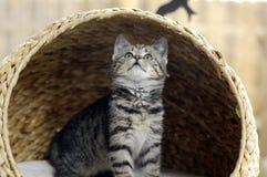 nyfiken kattunge Royaltyfri Foto