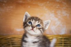 nyfiken kattunge arkivfoto