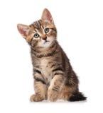 nyfiken kattunge Arkivbilder