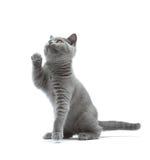 nyfiken kattunge Arkivbild