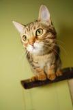 nyfiken kattunge Royaltyfri Bild
