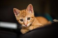 nyfiken kattunge Arkivfoton