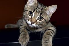 nyfiken kattunge little arkivbild