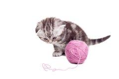 nyfiken kattunge little Arkivfoton