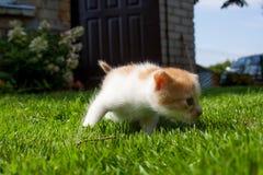 Nyfiken kattunge som kontrollerar att omge Fotografering för Bildbyråer