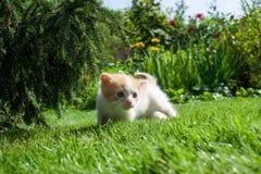 Nyfiken kattunge som kontrollerar att omge Royaltyfri Bild