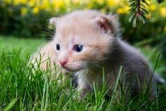 Nyfiken kattunge som kontrollerar att omge Royaltyfri Foto
