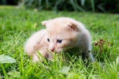 Nyfiken kattunge som kontrollerar att omge Arkivfoto