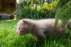 Nyfiken kattunge som kontrollerar att omge Arkivbild