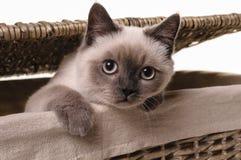 Nyfiken liten katt arkivbilder