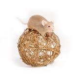 Nyfiken liten mus på den dekorativa bollen Arkivbild