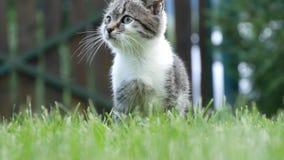 Nyfiken och skämtsam liten katt som spelar i gräs i hem- trädgård lager videofilmer
