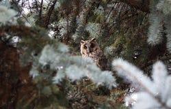 nyfiken owl Royaltyfria Foton