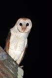 nyfiken owl för ladugård Royaltyfria Foton