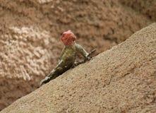 Nyfiken reptil Arkivfoto