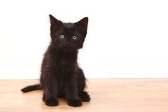 Nyfiken svart behandla som ett barn kattungen på vit Fotografering för Bildbyråer