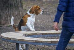 Nyfikenhunden parkerar in Arkivfoto