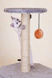nyfiket leka för kattunge Royaltyfria Bilder