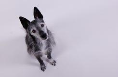 nyfiket se för hund Arkivbilder