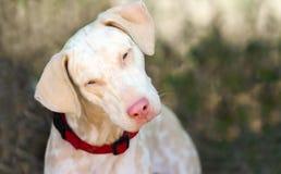 Nyfiket se för hund royaltyfri bild