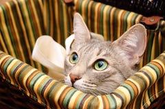 nyfiket se för katt rökigt Royaltyfria Bilder