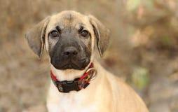 Nyfiket stirra för hund royaltyfri fotografi