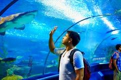 Nyfiket turist- hålla ögonen på med intresse på haj i oceanariumtunnel royaltyfria foton
