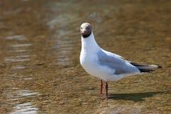 Nyfikna fåglar Fotografering för Bildbyråer