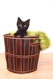 Nyfikna gulliga Kitten Inside en korg på vit Royaltyfria Foton