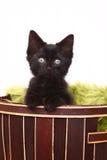 Nyfikna gulliga Kitten Inside en korg på vit Arkivbild