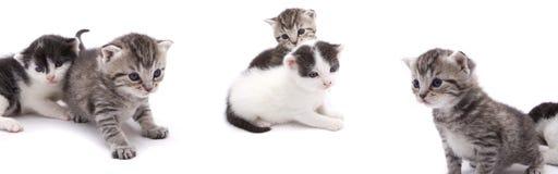 nyfikna kattungar Arkivbilder