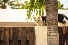 Nyfikna kattungar som sitter på trästaketet som ut ser från trädstammen Royaltyfri Bild