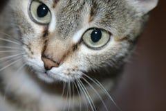 Nyfikna Kitty Cat royaltyfri foto