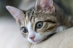 Nyfikna Kitty Kat Royaltyfri Fotografi