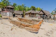 Nyfikna Komba Madagascar Arkivfoton